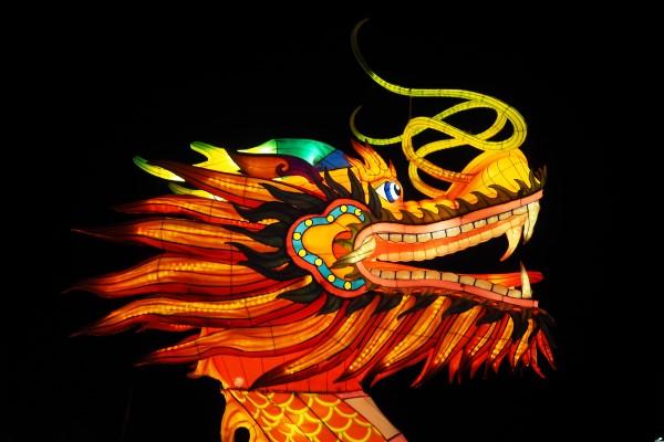 龍の参考画像